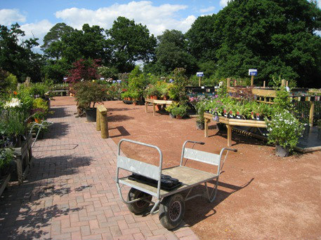 Royal Mires Nursery